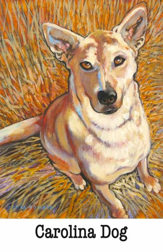 Carolina Dog Poster #2xx